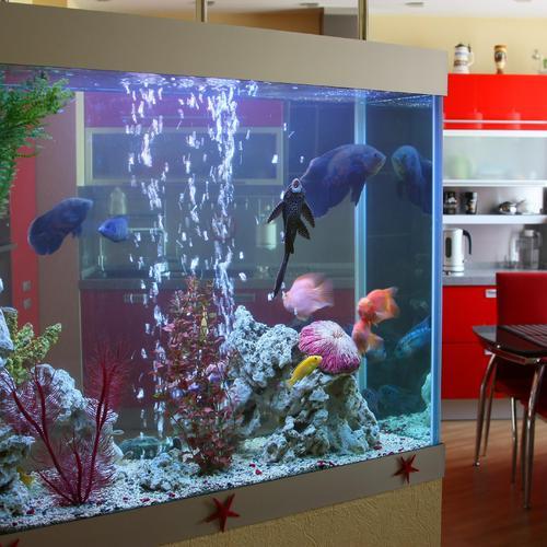 Conseils pour réduire le coût d'un aquarium