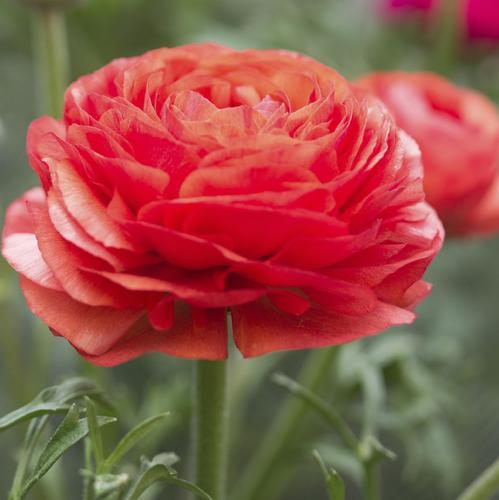 fleurs rustiques : liste - ooreka