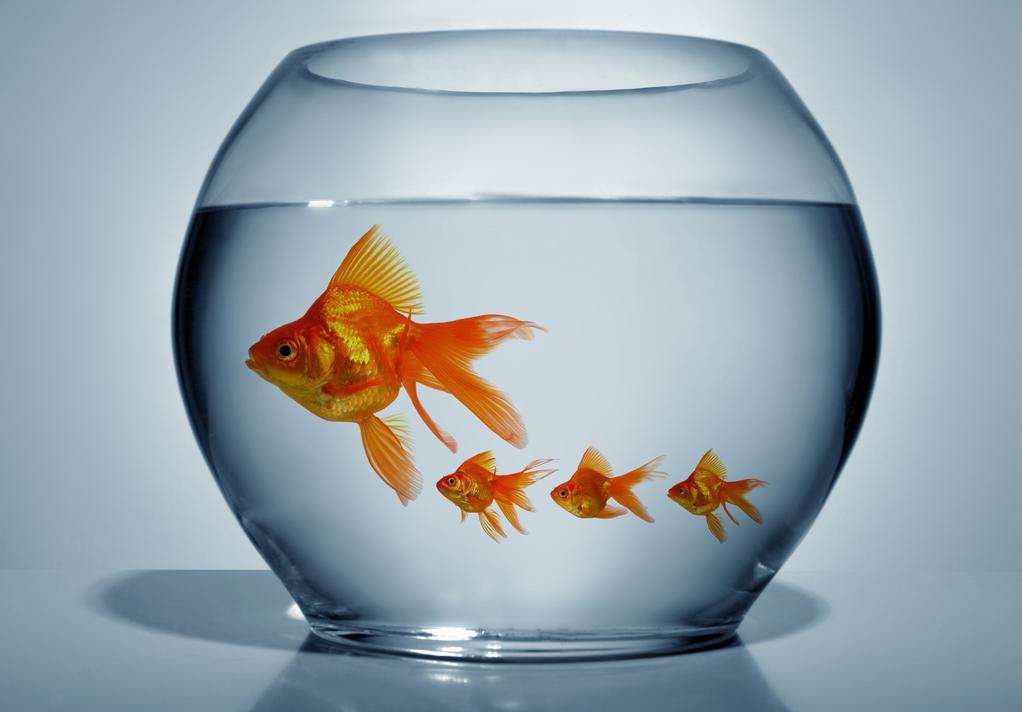 Mes poissons se reproduisent que faire for Poisson bocal