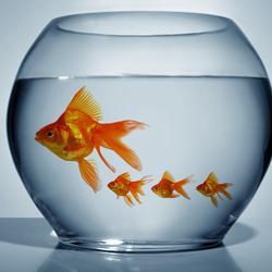 aquarium nos astuces pour r 233 ussir 224 attraper un poisson trop rapide aquarium