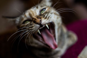 Répulsif à chat