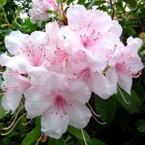 Fleurs De Bretagne Liste Et Caracteristiques Ooreka