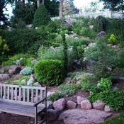 Plante de rocaille : liste - Ooreka