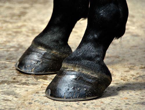 Rencontre d'une licorne... Sabot_cheval_gros_plan-main-12897761