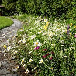 Jardin anglais comprendrechoisir for Modele de jardin anglais