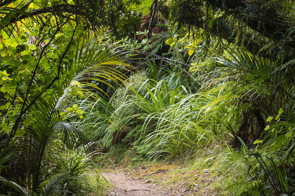 Jardin sous bois quelles plantes ooreka for Amenagement jardin foret