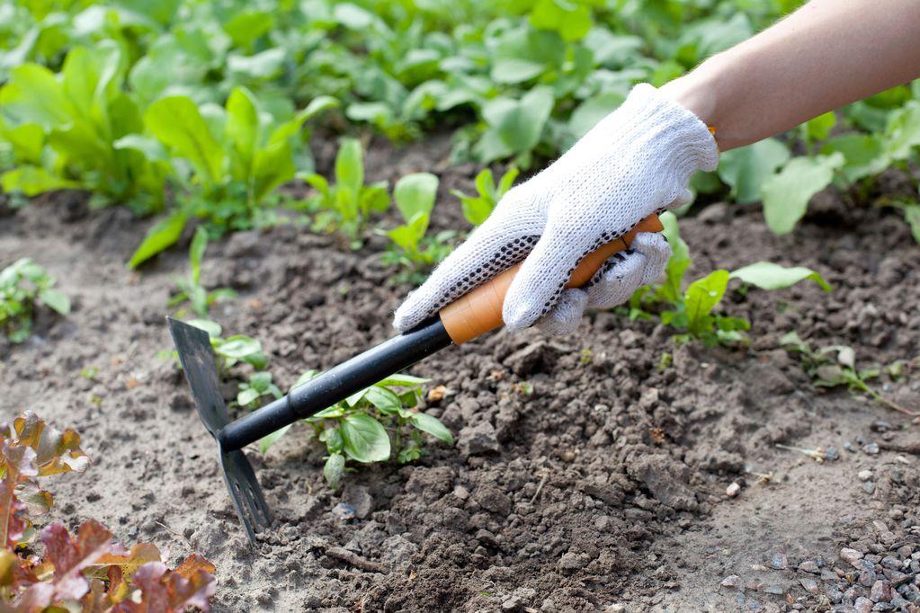 Jardinage pas cher plantes outils conseils ooreka - 94 outil de jardinage ...