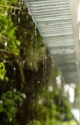 Gouttière avec eau de pluie arbres