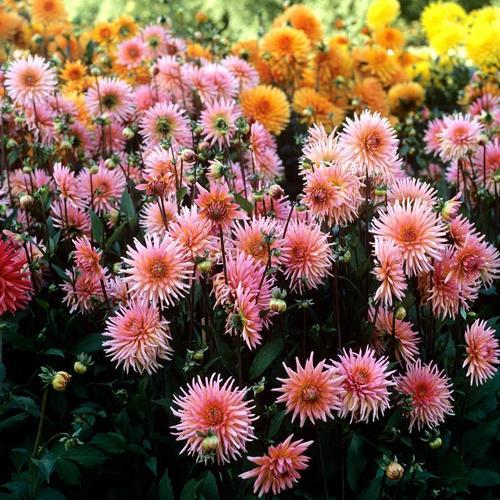 10 Noms De Fleurs Expliques Ooreka