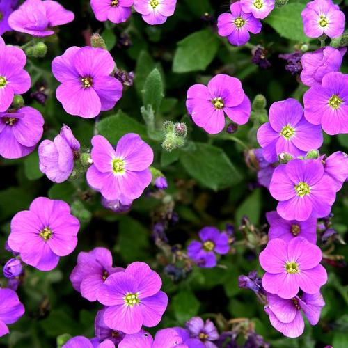 10 noms de fleurs expliqu s ooreka - Nom de fleur en anglais ...