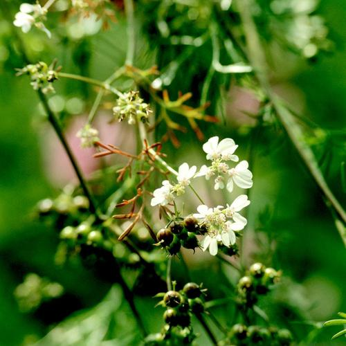 Liste De Fleurs Comestibles Ooreka
