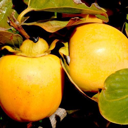fruits exotiques : liste - ooreka