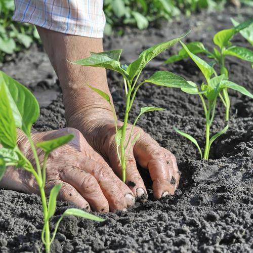 Cultiver des légumes selon la nature du sol