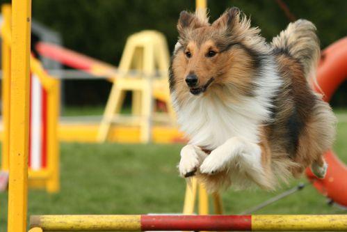 Pourquoi pratiquer un sport canin?