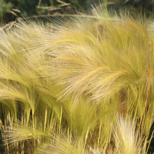 Plante Pour Terrain En Pente plante vivace rampante : liste - ooreka