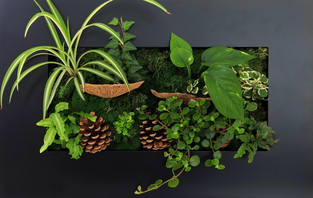 Tableau v g tal caract ristiques achat et prix ooreka for Fabriquer cadre vegetal mural