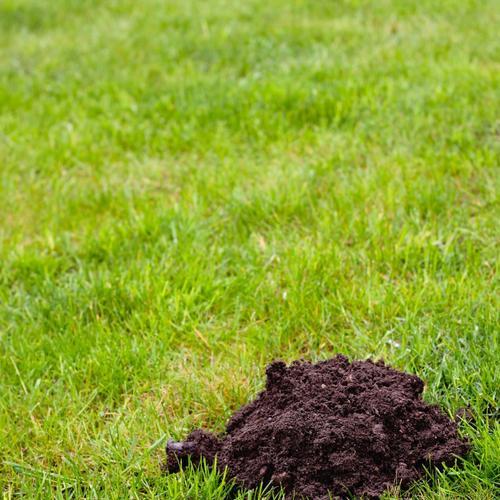 12 conseils pour un gazon plus vert que celui du voisin - ooreka