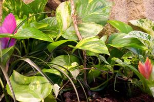 Plantes tropicales feuilles vertes