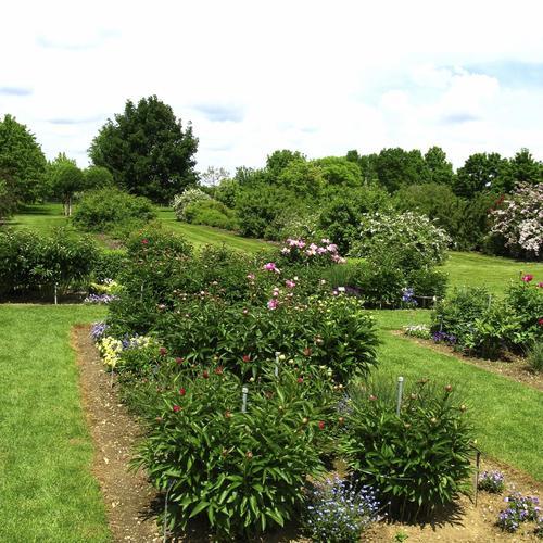 Choisir et planter un arbre truffier