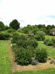 pollinisation arbres fruitiers importance de la pollinisation. Black Bedroom Furniture Sets. Home Design Ideas