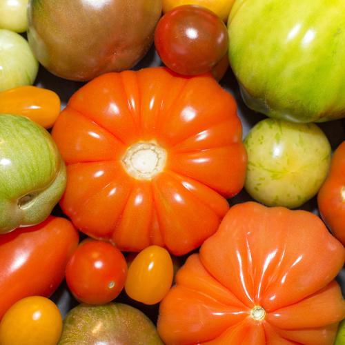 Conserver les tomates