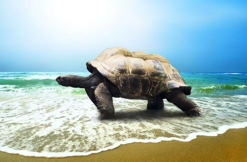 Tortue ooreka - Images tortue ...