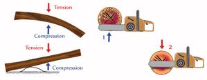 Comment effectuer la découpe avec la technique du tronc en extension?