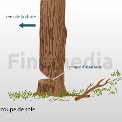 Couper du bois les diff rentes tapes for Prix de l elagage d un arbre