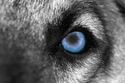 Les troubles du comportement du chien