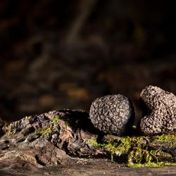 Plant truffier