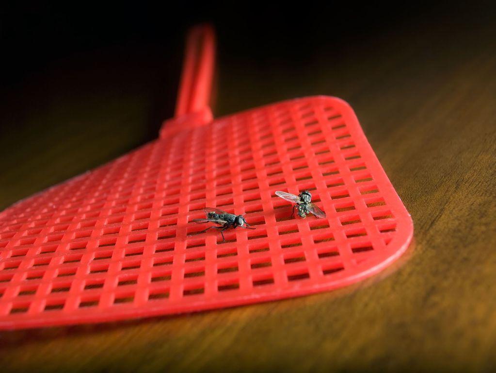 tue mouche m thodes tue mouche et leur efficacit ooreka. Black Bedroom Furniture Sets. Home Design Ideas