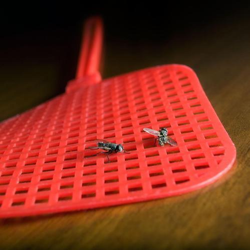 Comment se débarrasser des mouches