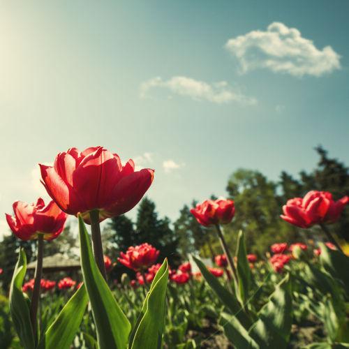 Que faire en octobre pour les fleurs ?