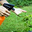 Utiliser un engrais foliaire