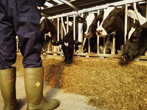 Assurance élevage: pour le cheptel