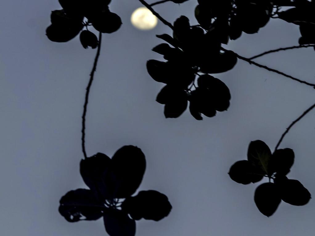 Lune montante d finition ooreka - Lune montante et descendante ...