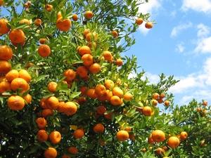 arbre fruitier tout savoir sur l 39 arbre fruitier. Black Bedroom Furniture Sets. Home Design Ideas