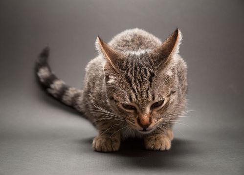 Vers du chat