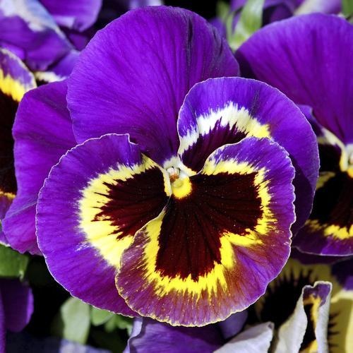 Fleur D Hiver Pour Balcon Liste Ooreka