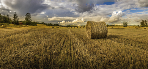 Achat de ferme agricole