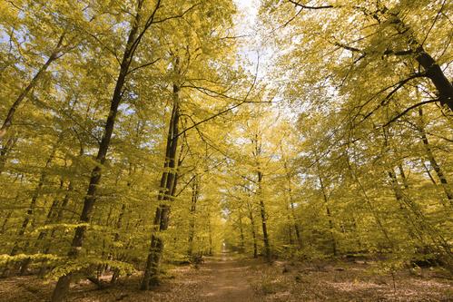 Achat de forêt