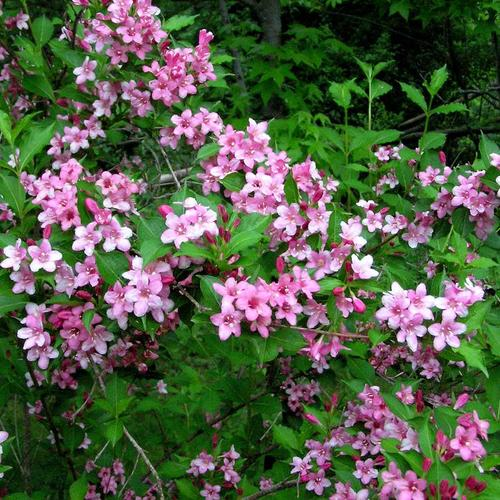 Plante retombante feuillage persistant finest euphorbia for Plante vivace retombante