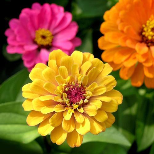 quelles fleurs planter en juin ?