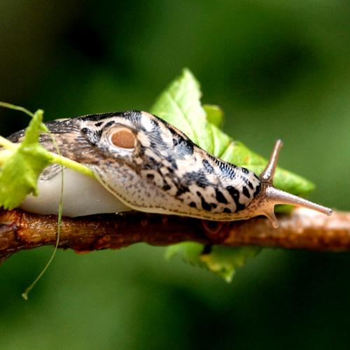 Lutter contre les limaces et escargots jardinage - Lutter contre les doryphores bio ...