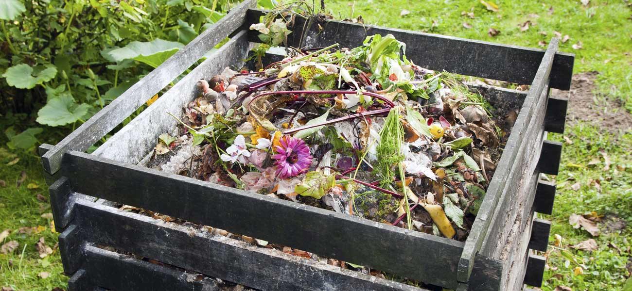 Compost  Ooreka